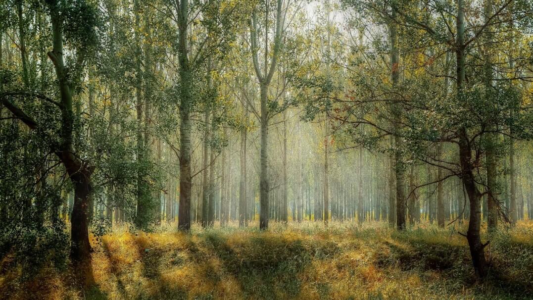 Kupili las, by ochronić drzewa i zwierzęta