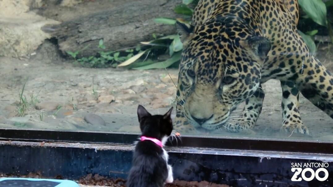 Spotkanie kota z kotkiem. Czworonogi ze schroniska na wycieczce w zoo