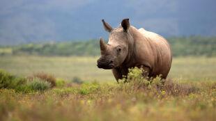 Burza przewróciła słup energetyczny. Zginęły: nosorożec, żyrafa, dwa lwy i dwie hieny