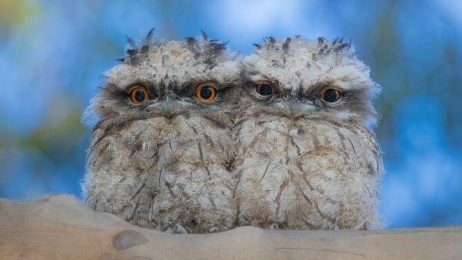Pierzaste kupki nieszczęścia. Te ptaki mają wszystko, by podbić media społecznościowe