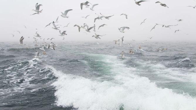 Prognoza pogody na dziś: spadnie marznący deszcz. Nad Bałtykiem rozszaleje się sztorm