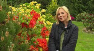 Rododendronowe królestwo (odc. 492)